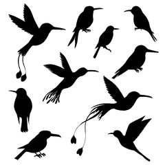 vector set of hummingbirds silhouettes