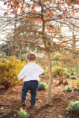 Ecstatic little boy walks in the garden