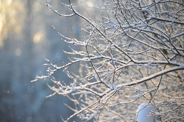 Winter landscape - snow covered icy white branches
