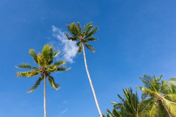 Palm trees in the sky.