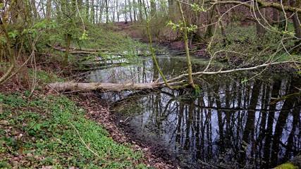 Teich mit umgestürzten Baum im Wald