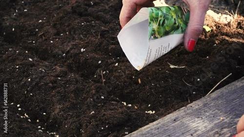 Junge Frau Sat Vogerlsalat Feldsalat Im Hochbeet An Stockmaterial
