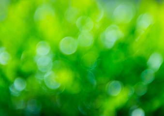 natural green background with bokeh circles.