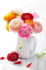 Fototapete - beautiful ranunculus flowers in vase over white