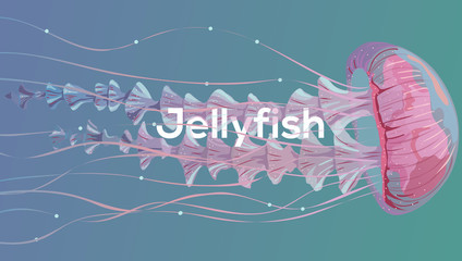 Background with detailed transparent jellyfish. Sea jelly on blue background. Useful for banners, broshures, covers. Vector illustration