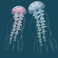 Detailed transparent jellyfish. Pink and blue sea jelly on blue background. Vector illustration