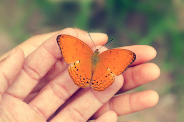 Butterfly on hand in nature and green background