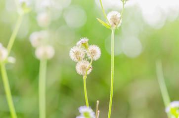 white flower wild on green background at season spring