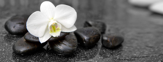 Tuinposter Orchidee Single white orchid and black stones close up.