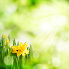 Bright green spring background