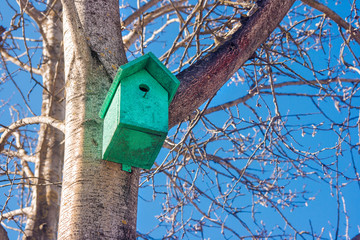 birdhouse on a tree in the spring