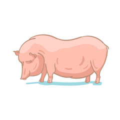 Realistic colored sketch vector illustration of farm pig
