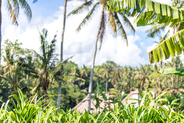 Tropical landscape with palms. Holiday and vacation concept. Tropical Bali island, Indonesia.