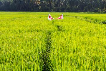 Aluminium Prints Grocery Rijst velden in Sri Lanka
