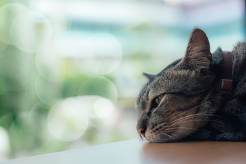 A lonely cat sleep on the table beside the window in selective focus.