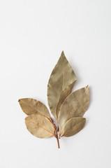 Laurel branch on a white background