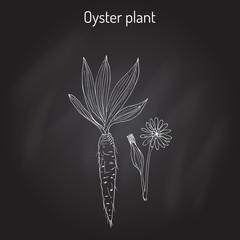 Goatsbeard Tragopogon dubius , or yellow salsify, western goat s-beard, wild oysterplant - edible plant