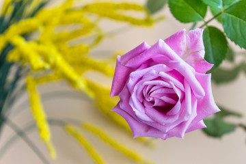 Close up of single pink rose with green leaves on the background of yellow flowers.