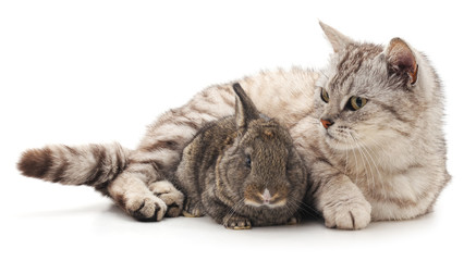 Cat and rabbit.