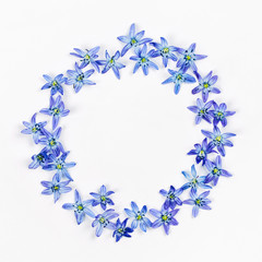Flowers composition. Frame made  of  blue first spring flowers. Flat lay, top view.