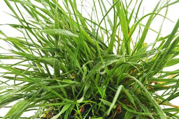 Bush green grass.