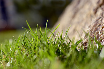 A juicy spring grass on a sunny day and a beautiful stone.
