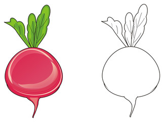 Vegetable, radish, food, health, root, red, cartoon, farm, garden, round, Leaves, underground, green, two, different, colored, coloring, preschool, paint