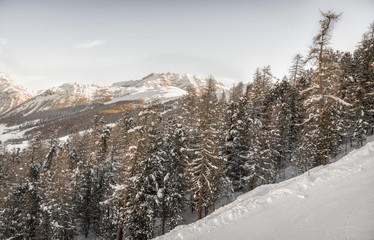 Winter ski landscape with snow on the trees in high mountains