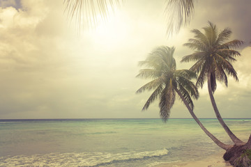 Fotomurales - tropical beach with coconut palm
