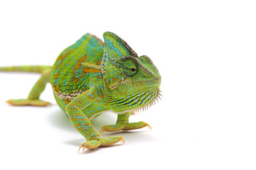Deurstickers Kameleon chameleon isolated on white background