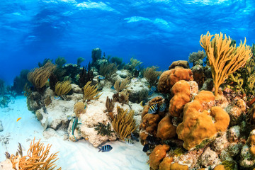 Wall Murals Under water Colorful shallow water coral lagoon in the tropics