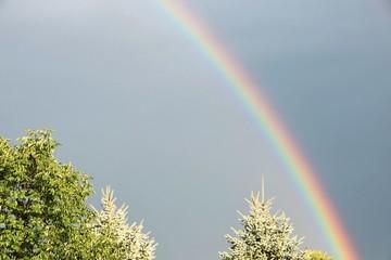 Rainbow over Trees
