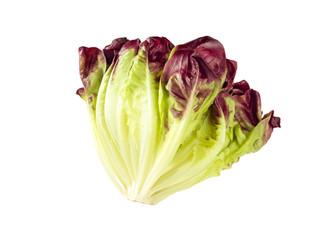 Purple lettuce salad head