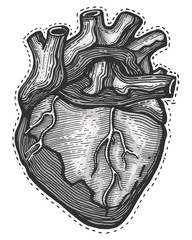 Hand drawn Human heart vector illustration