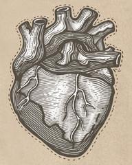 Hand drawn Human heart illustration