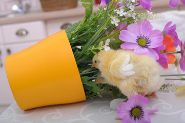 Chickens and flowers in a pot