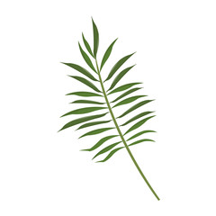 tropical leaf icon over white background. colorful design. vector illustration