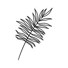 Tropical leaf icon over white background. vector illustration