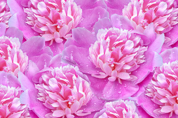 Bright colorful flowers peonies