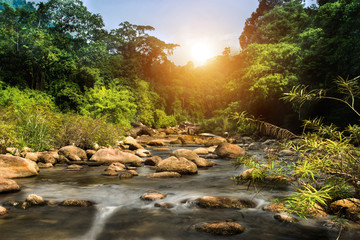 Small rock brook in tropical forest.