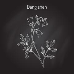 Codonopsis pilosula, or dang shen, or poor man s ginseng. medicinal plant