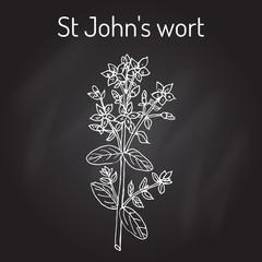 St. John s wort Hypericum perforatum , medicinal plant