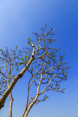 Branches with blue sky.