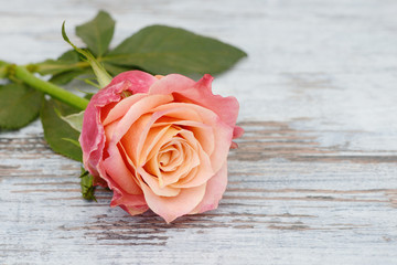 rose lying on wood