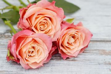 roses lying on wood