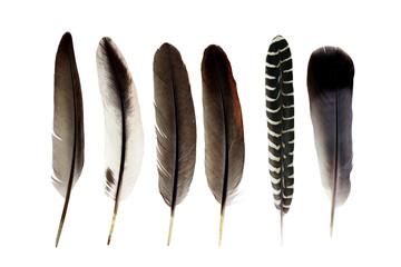 bird feather isolated on white background Fotoväggar