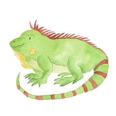 Iguana Watercolor Green Animal Hand-Painted Isolated
