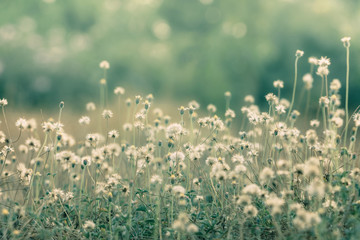 Keuken foto achterwand Olijf Meadow flowers, beautiful fresh morning in soft warm light. Vintage autumn landscape blurry natural background.
