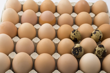 Background of chicken and quail eggs in a cardboard tray.