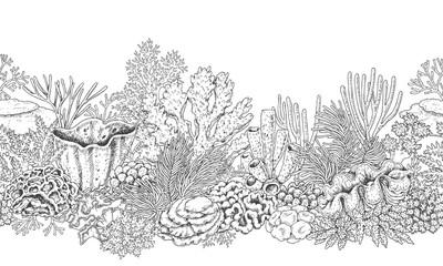 Coral Reef Line Horizontal Pattern